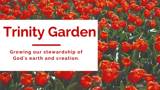 Trinity Garden